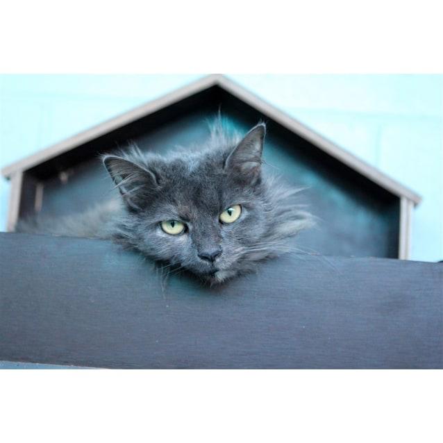 Photo of Smokey