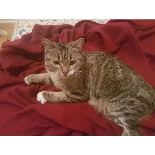 Photo of Minnie