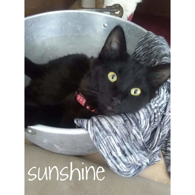 Photo of Sunshine