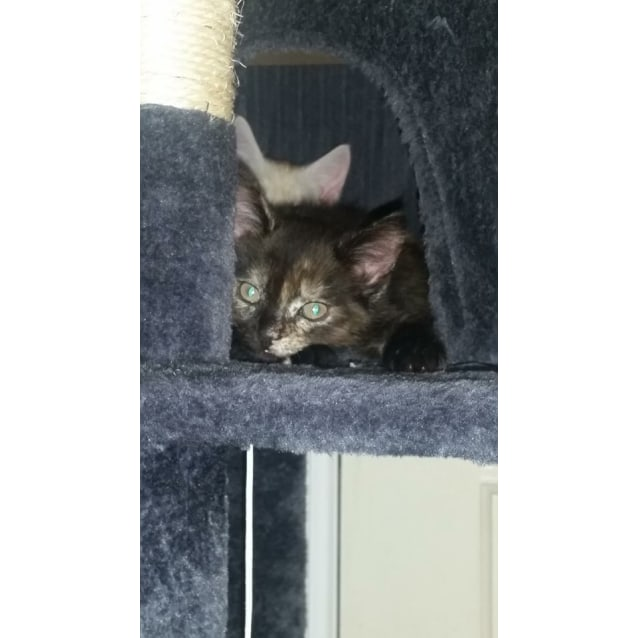 Photo of Mina