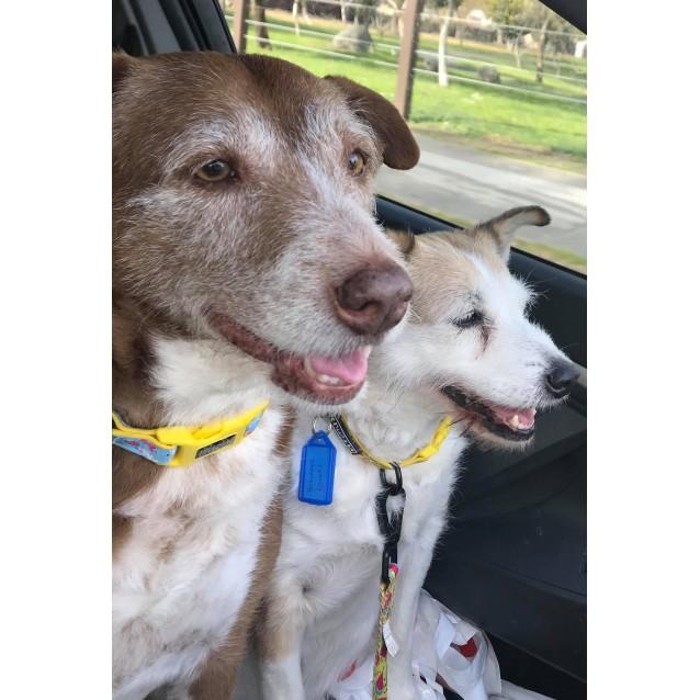 Photo of Bitsa &Turbo