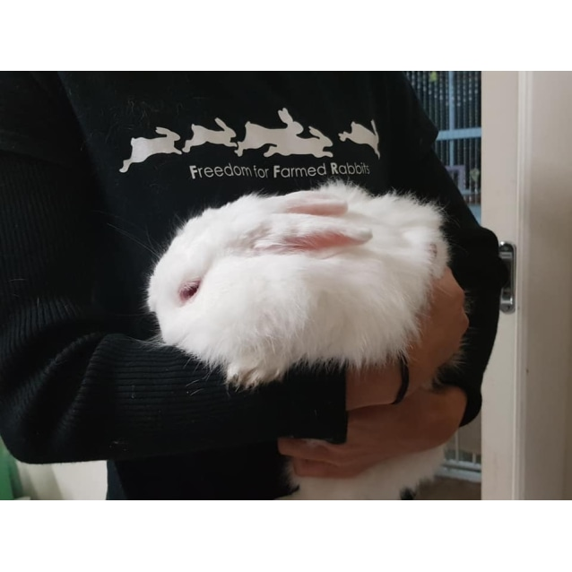 Photo of Flopsy And Mopsy