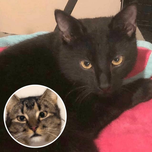Photo of Ivy & Smokey