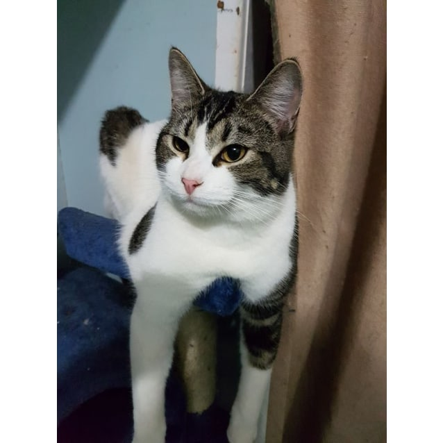 Photo of Maurice