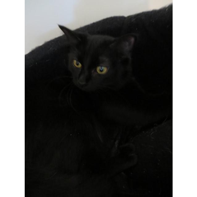 Photo of Phoebe