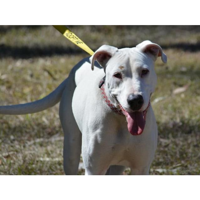 Photo of Dally (Adoption Pending)