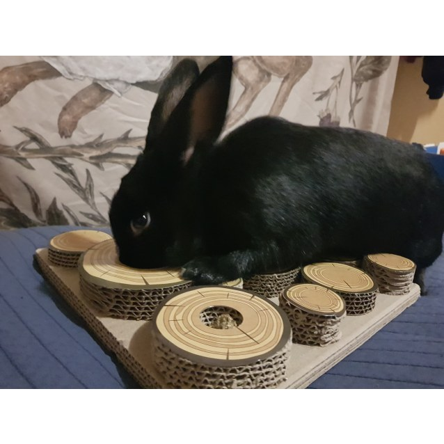 Photo of Azuma  On Adoption Trial