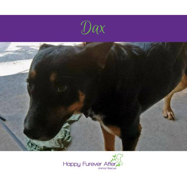 Photo of Dax