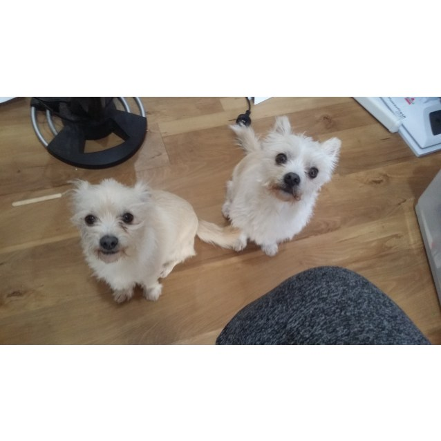 Photo of Milly & Tilly * No More Calls *