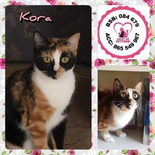 Photo of Kora