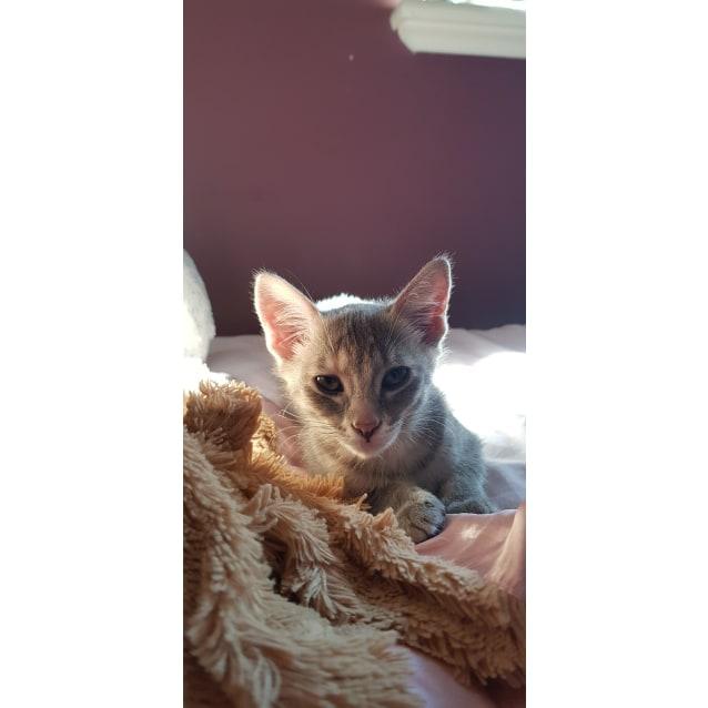 Photo of Peeper (Hc990)
