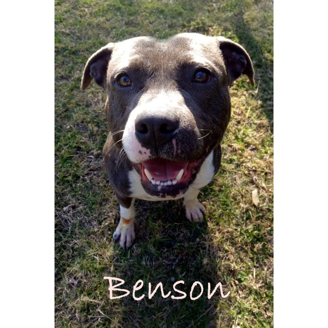 Photo of Benson