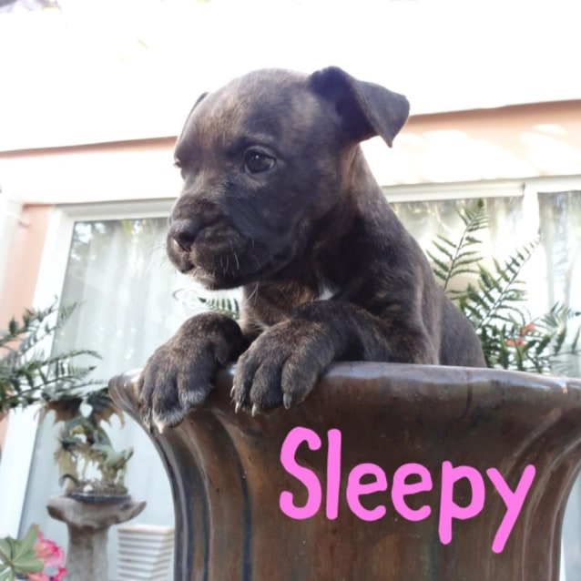 Photo of Sleepy