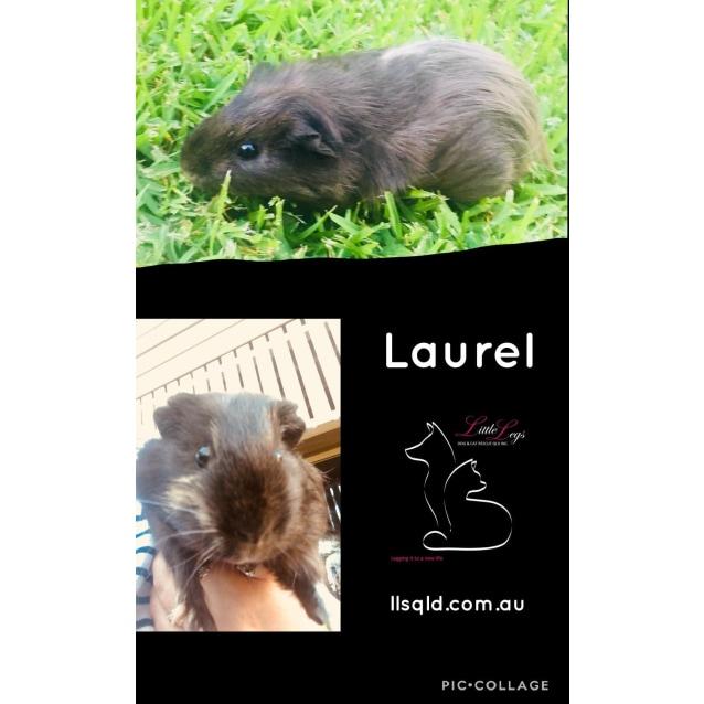Photo of Laurel