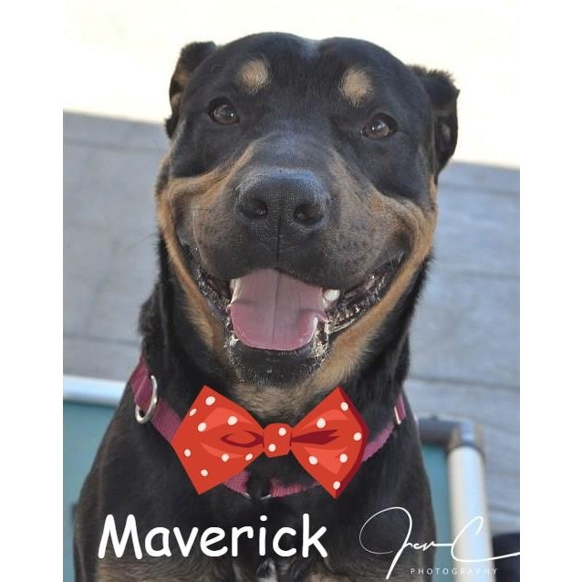 Photo of Maverick ** Simply The Best **