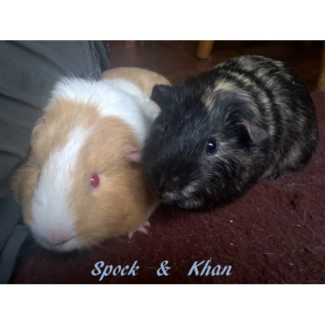 Photo of Spock And Khan