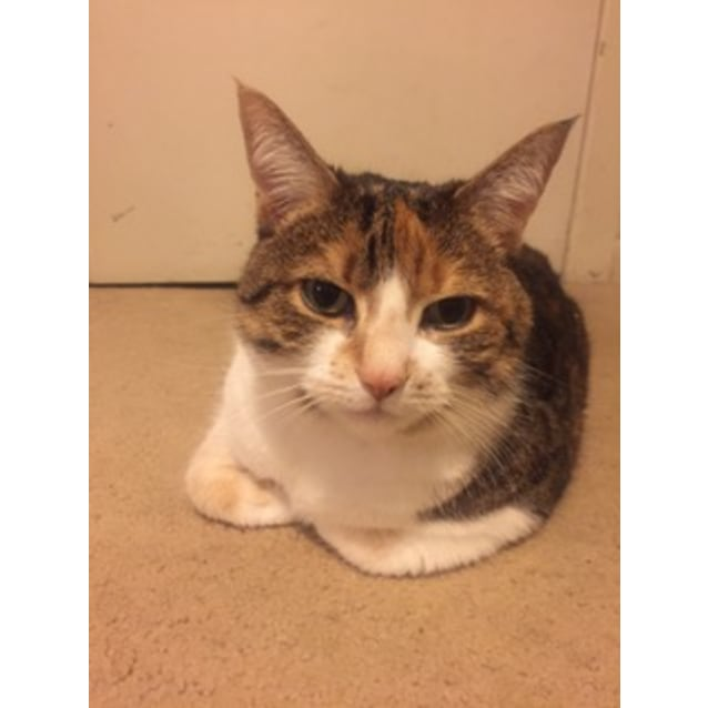 Photo of Paisley (Located In Carlton North)