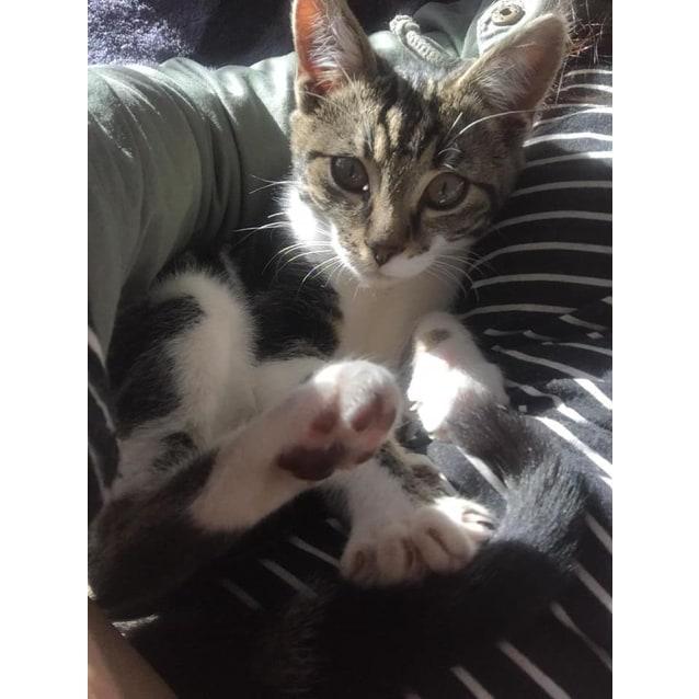 Photo of Maisey