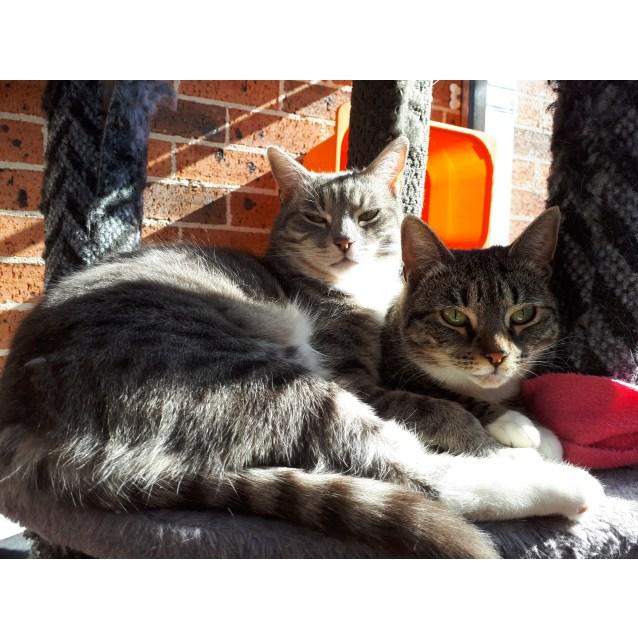 Photo of Sarah & Sasha