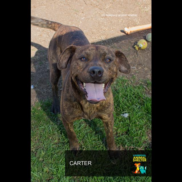 Photo of Carter