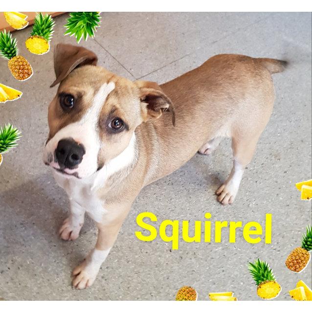 Photo of Squirrel (370818)