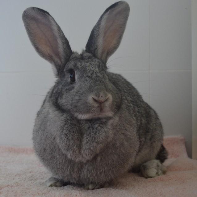 Photo of Greya