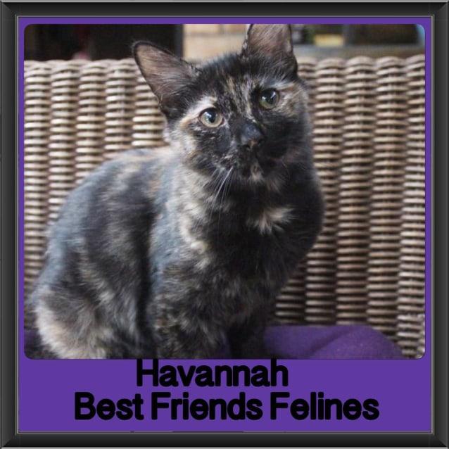 Photo of Havannah
