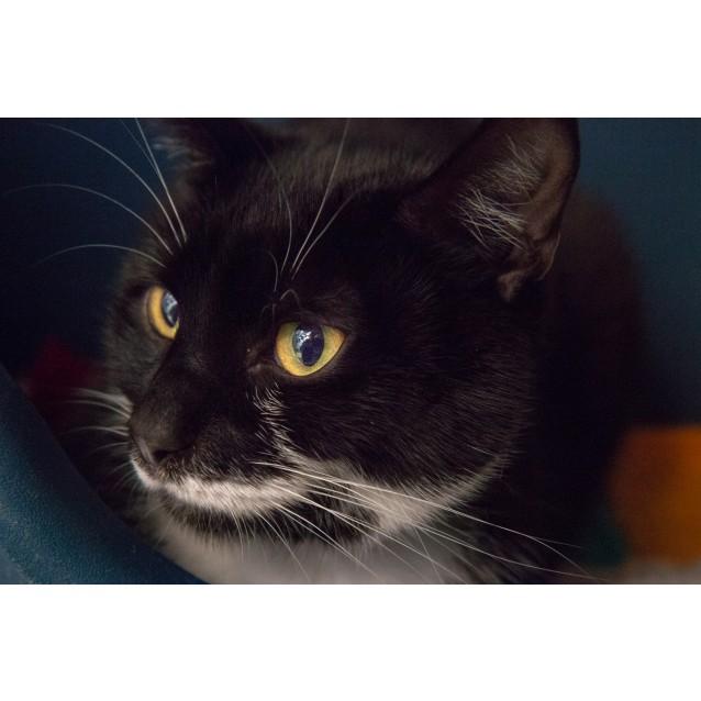 Photo of Thomas (3092)