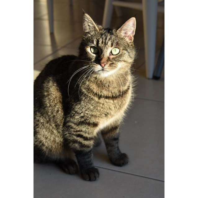 Photo of Pebbles (Located In Cranbourne)