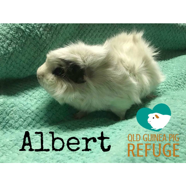 Photo of Albert