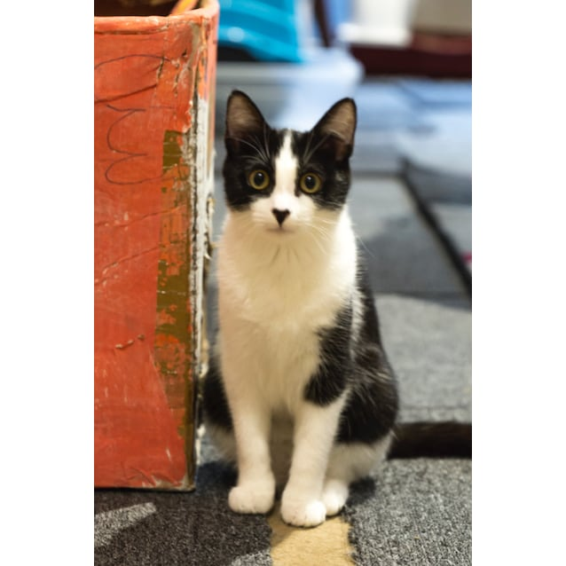 Photo of Dash (Located In P Oint Cook)