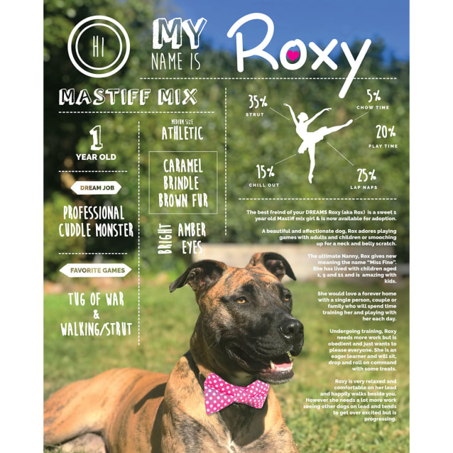 Photo of Roxy ~ Mastiff X (On Trial 4/12/18)