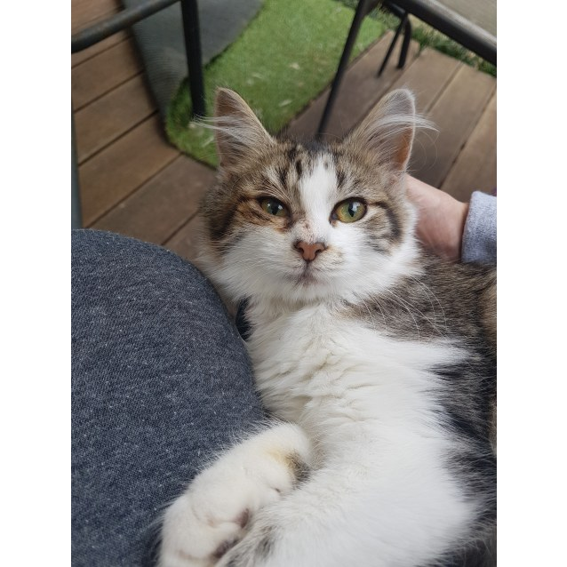 Photo of Flynn (Located In Endeavour Hills)