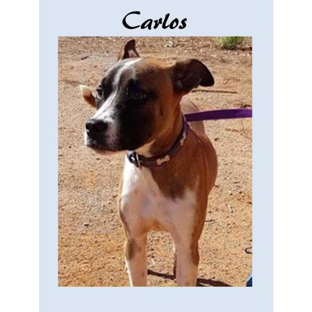 Photo of Carlos