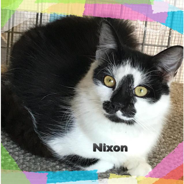 Photo of Nixon