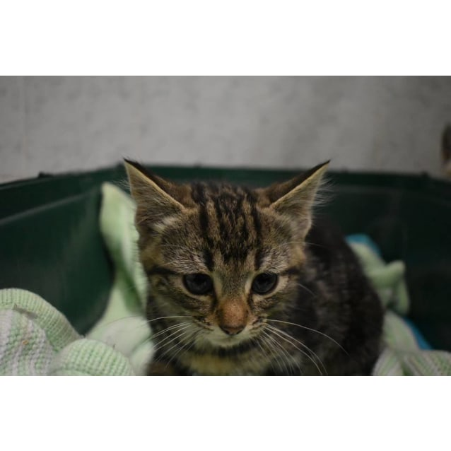 Photo of Grumpy