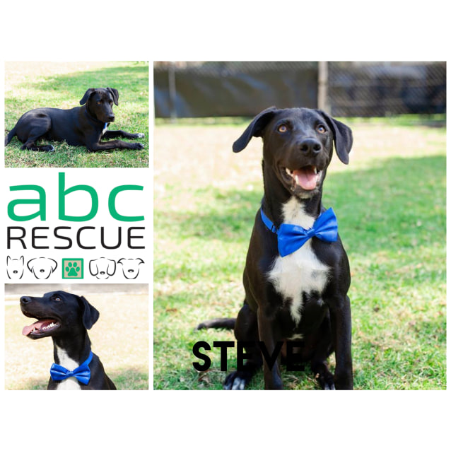 Photo of Steve (Attending The Big Adopt Out)