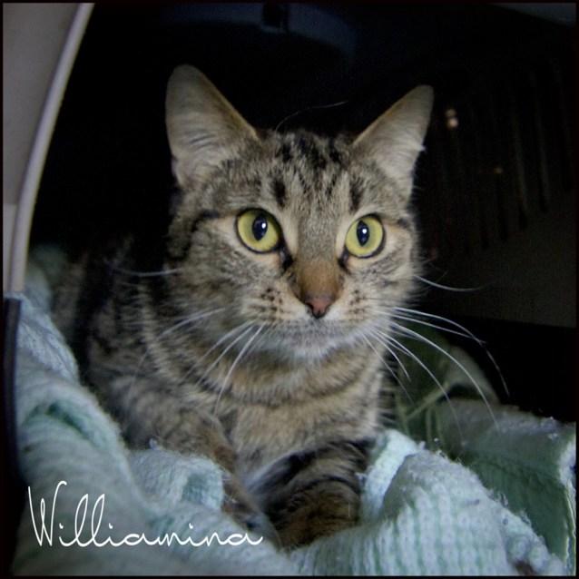 Photo of Williamina