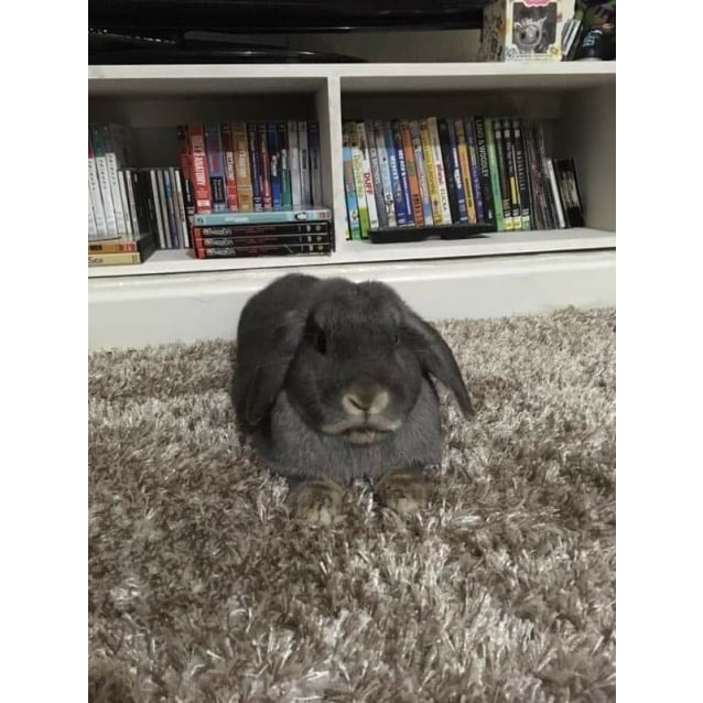 Photo of Archibald