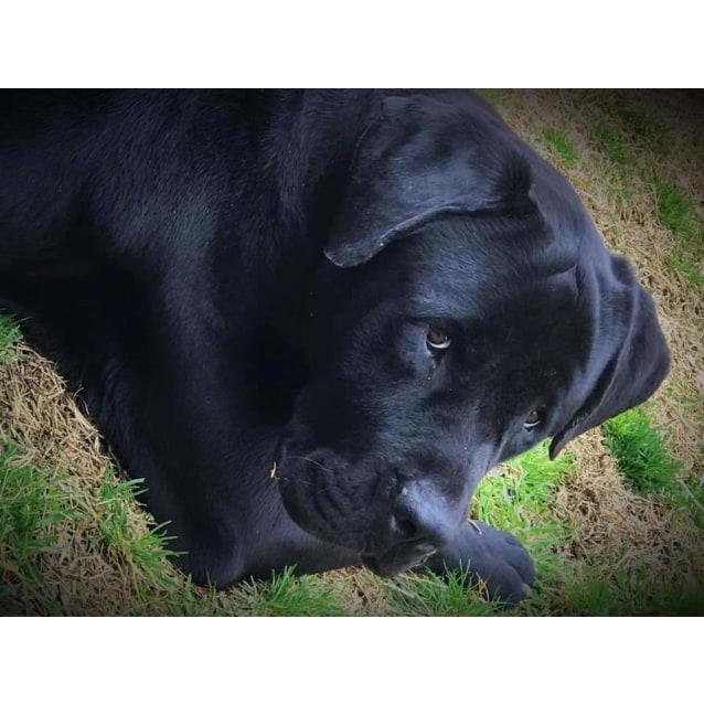 Photo of Deuce