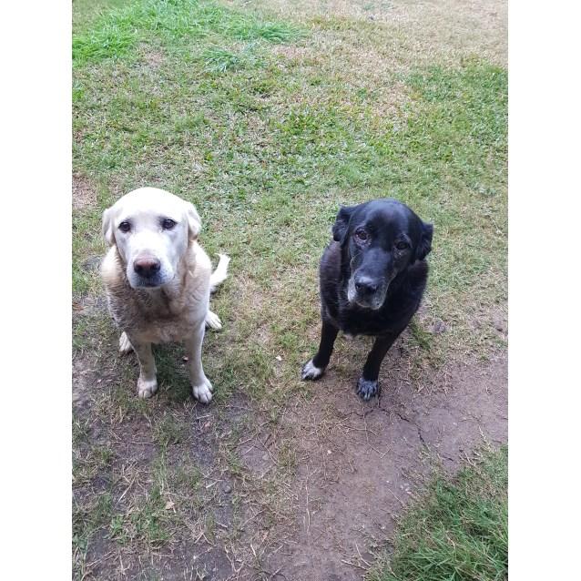 Photo of Mishca And Hansie 🐶🐶