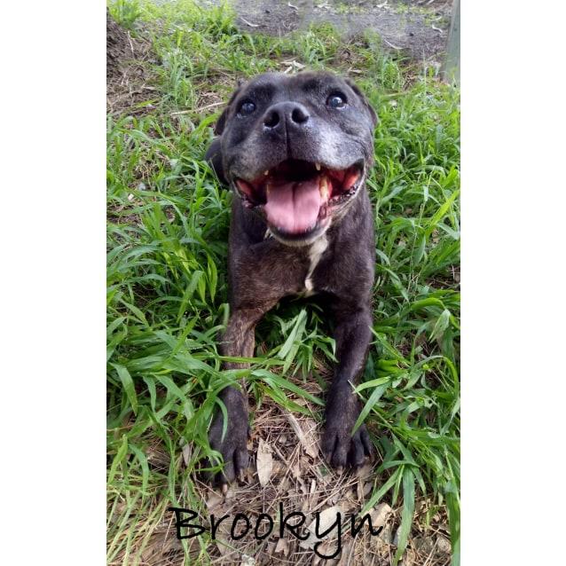 Photo of Brookyn