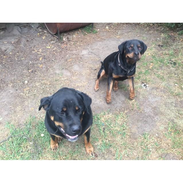 Photo of Dallas And Xena