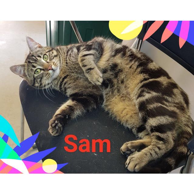 Photo of Sam (510818)