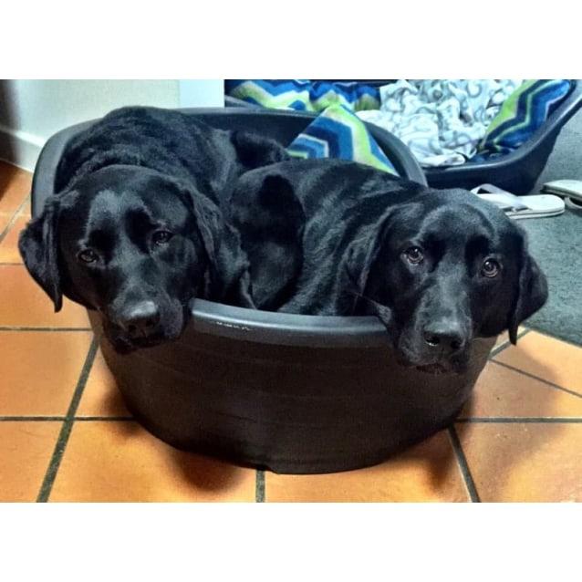 Photo of **Aplications Closed** Bella  & Mia