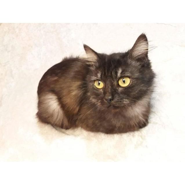 Photo of Octavia