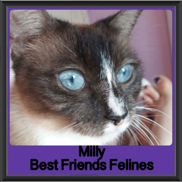 Photo of Milly