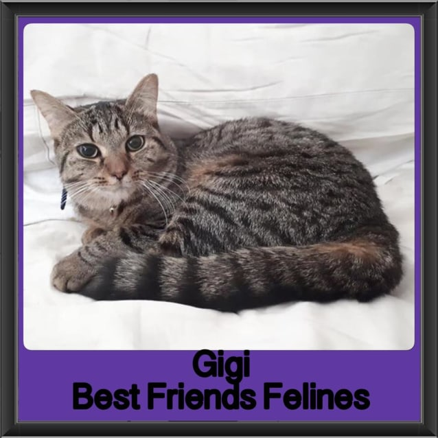 Photo of Gigi