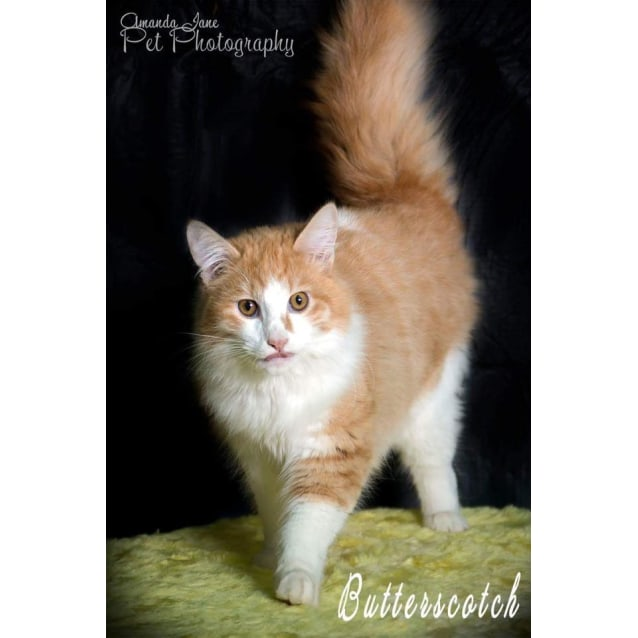 Photo of Butterscotch