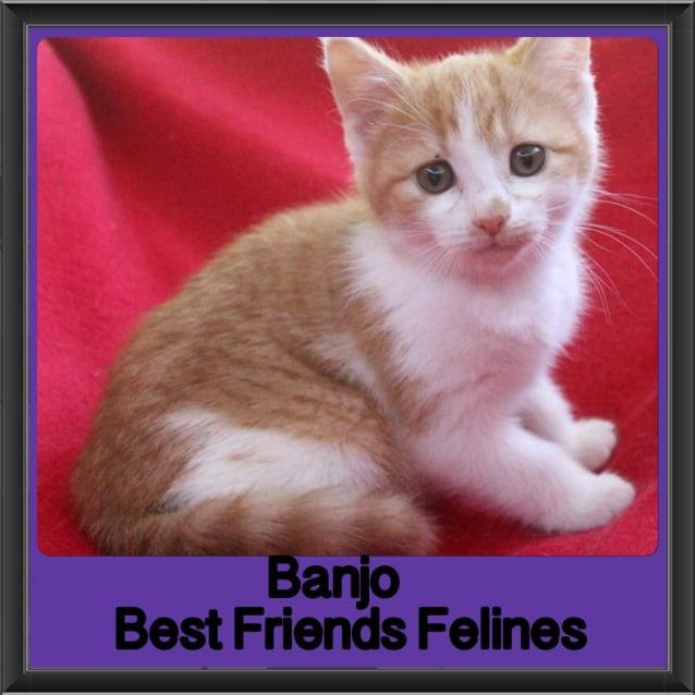 Photo of Banjo